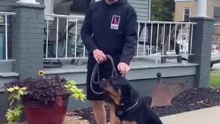 Amazing Dog Trainning Video