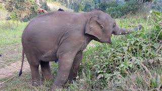 baby elephant in sanctuary