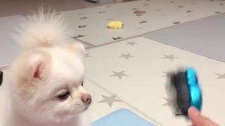 Adorable puppy really enjoys scratches