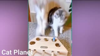 CATS VIDEOS COMPILATION Funny