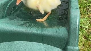 Gosling Gets Stuck on Slide