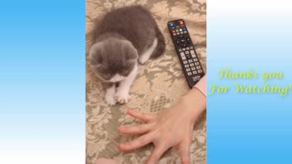 Watch this animals being cute and funny