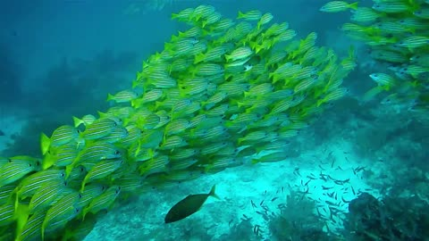 View of School of fish