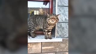 Funny talking cat compilation video