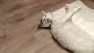 Cone Collar Stops Kitty From Cleaning Himself