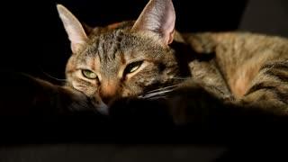 cat kitten kitty sleepy pet