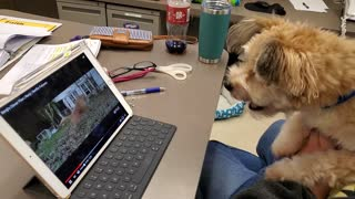 Confused puppy thinks he sees himself on TV, tries to make contact