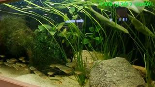 Beautiful aquarium models - European Aquarium Fair
