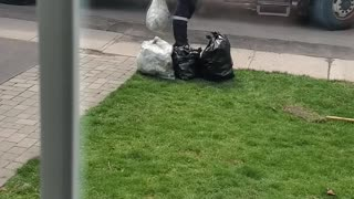Fooling the Trash Guys