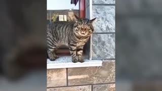 Cats speaking !!