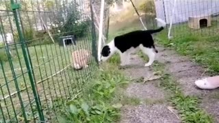 Group of Dogs playing in a Funny way