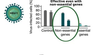Using crispr to combat viral infection