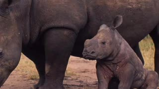 Rhino guard reveals the last moments before his death and his final extinction