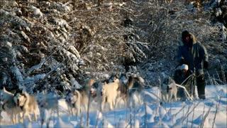 Aurora Chasing and Dog Sledding in Fairbanks, Alaksa