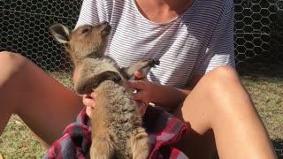 Baby Kangaroo Loves Tickles