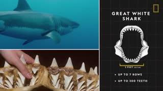 shark attack ocean
