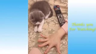 BEST CUTE CATS AND DOGS COMPILATION