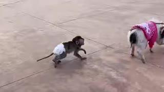 CHINA FUNNY VIDEO 2021Y VIDEO TIK TOK EP39