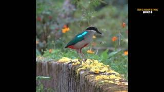 Beautiful Bird in Nature - South America