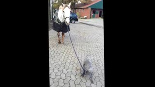 Baby dog walking with horse!