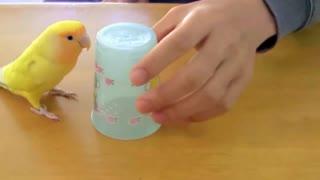 Stubborn parrot nervous parrot