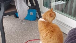 Dexter love string