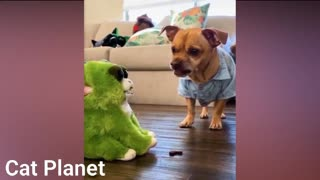 Funniest Cats Video Compilation 2021 series.