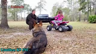 Guard Dog Training !