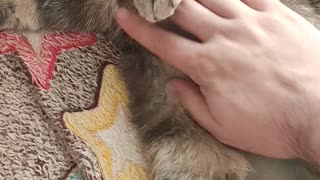Affectionate and beautiful cat bites. May 2020