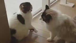 funny animal video 5