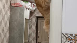 Spider Cat Hangs From Door Frame