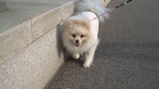 a walking dog2