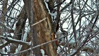 Incredible Woodpecker Make Master Piece Of His Tree