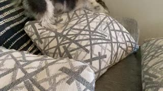 Cute Puppy Dries Herself Off with Pillows After Bath