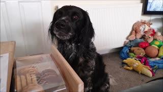Dog isnt impressed when she doesnt get a biscuit