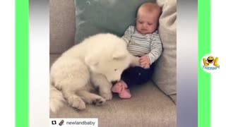 Viral video Funy babies laughing hystericaly
