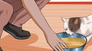 Take Care of Nursing Cats
