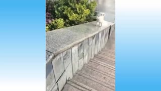 Crazy and Funny Pets Videos