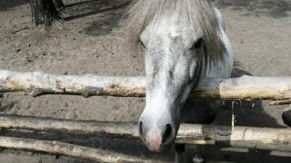 Very beautiful ponies enjoy with us.
