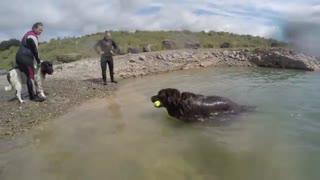 Dog Rescue Training