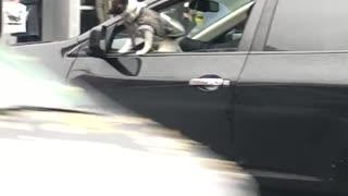 Dog grey sweater window of car