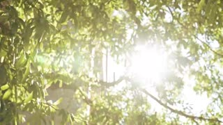 Beautiful Sunlight Videos with Music - Stock Footage - Nature Videos