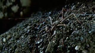 Monster Bug Wars: Katydids