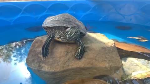 Turtle enjoying the day