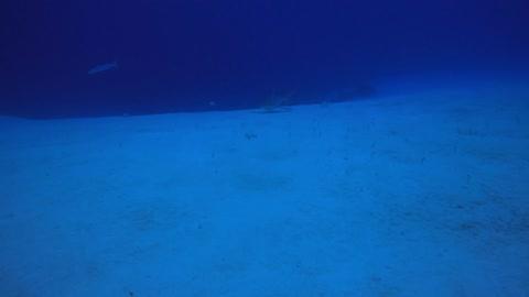 Reef Shark and Garden Eels