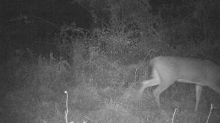 PA 8 point trailing a doe