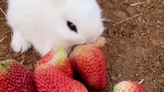 My lovely rabbit 🐰