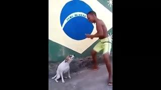 Perrito bailando con chico de Brasil