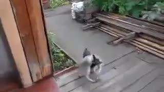 Smart Dog In Full Motion