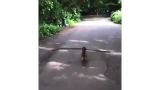 Cute dog practice 6ft social distancing